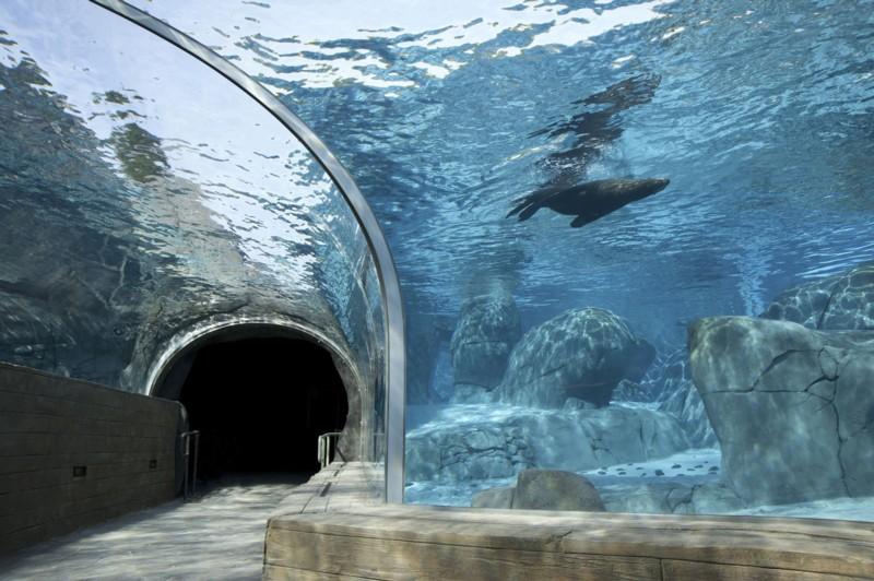 Sea Lion sound exhibit st louis zoo