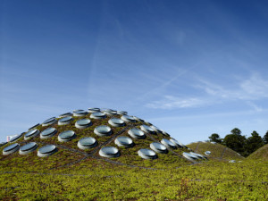 california academy of sciences living roof by tim griffith