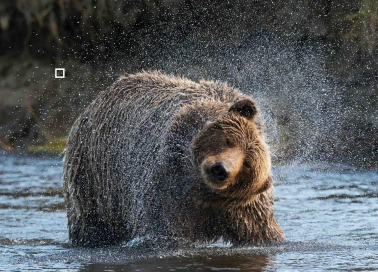 eye test brown bear