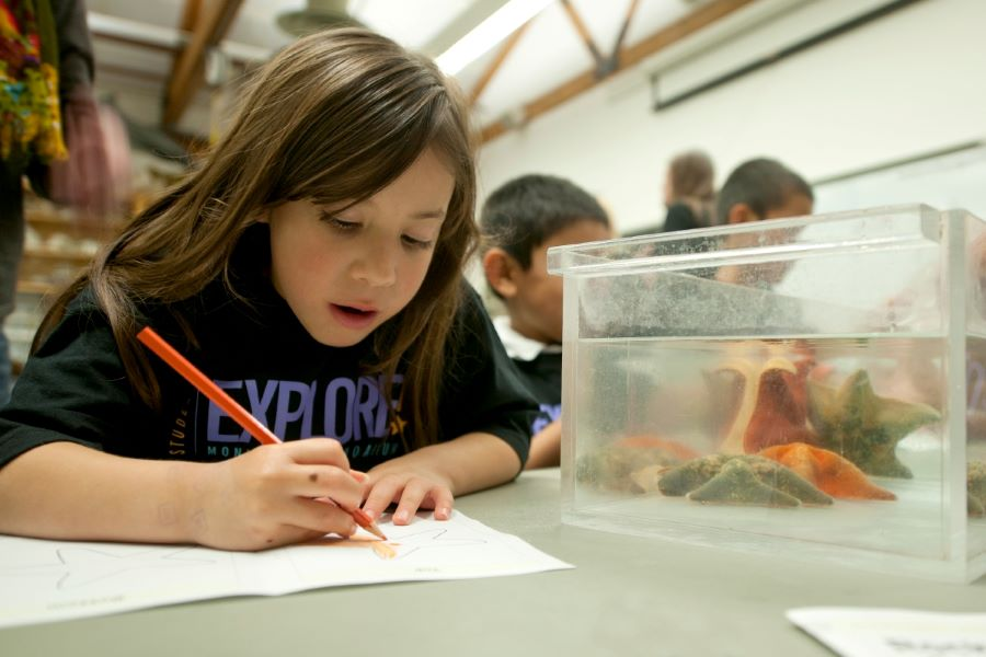 Girl learns about a starfish at Monterey Bay Aquarium