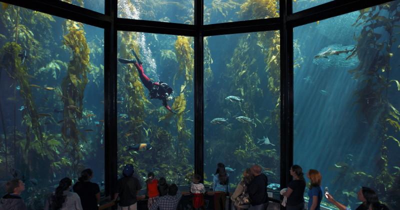 Large fish tank at monterey bay aquarium