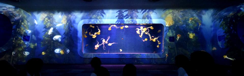 Enoshima Aquarium Japan