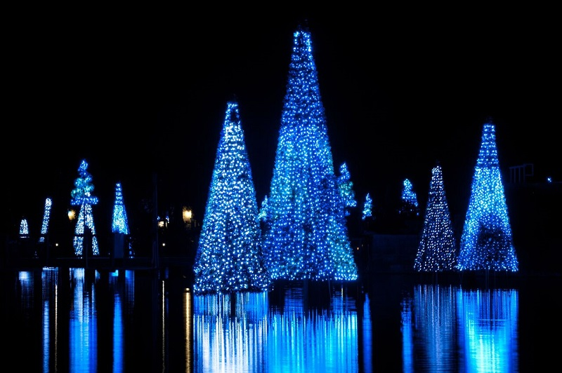 Sea of Trees Seaworld Christmas