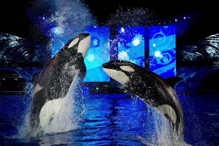 Shamu Christmas Miracles Seaworld