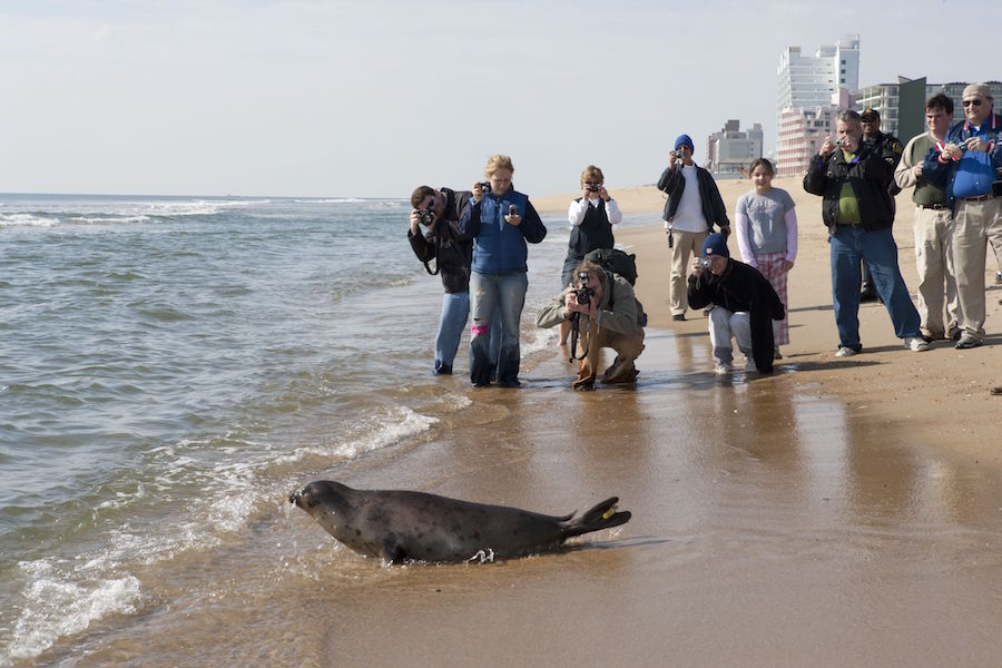 baltimore aquarium seal release on beach