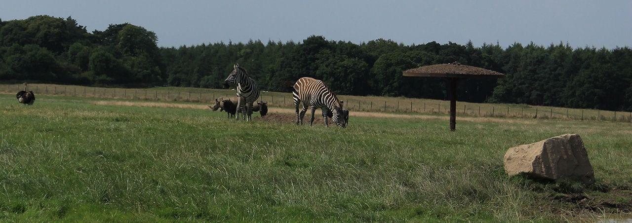 Rhino Section, wildebeest, zebra and ostrich knowsley