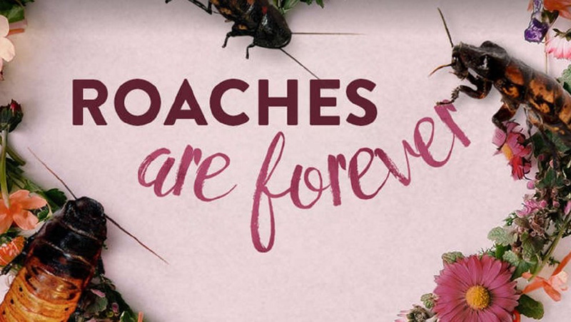 roaches are forever Valentine's Day 2017