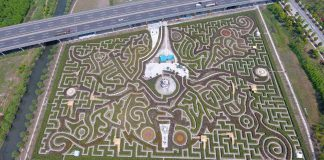 Adrian Fisher ningo world's largest hedge maze butterfly