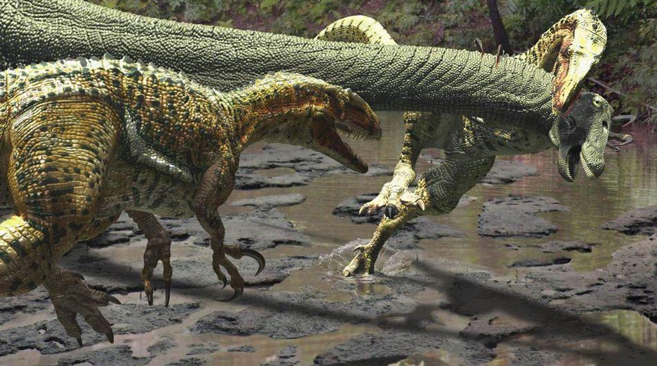 Australovenator wintonensis dinosaurs jpg (1)