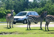 Wildlife conservationist to buy Palm Beach's Lion Country Safari