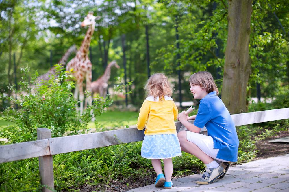brother and sister watch giraffes at zoo