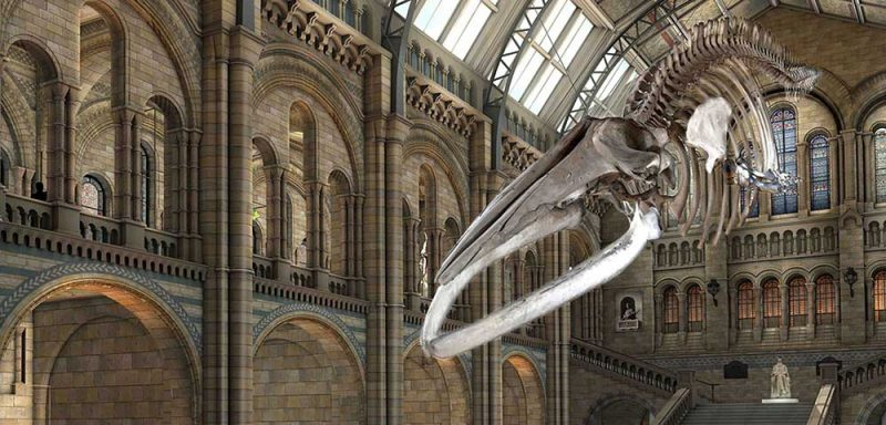 Hope replaces Dippy at London's Natural History Museum