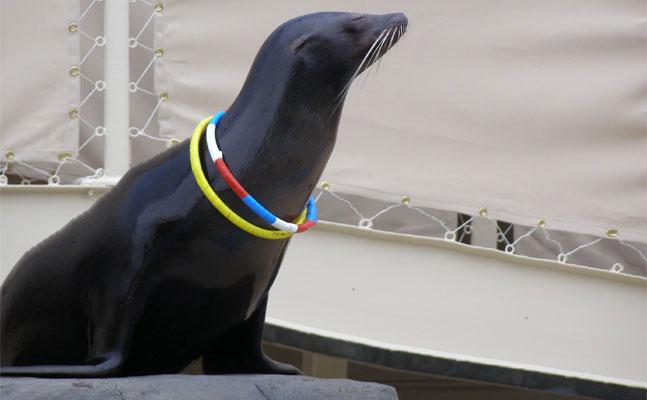 sparky the sea lion como park zoo