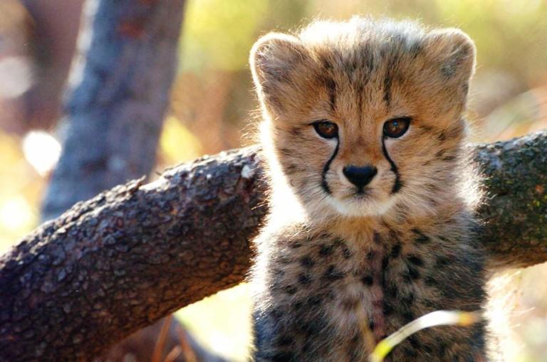Fur flies as BREC board votes to relocate Louisiana's Baton Rouge Zoo