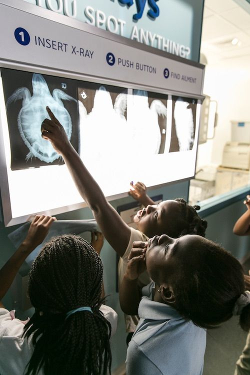 children look at XRay at Zucker Family Sea Turtle Recovery jpg (1)