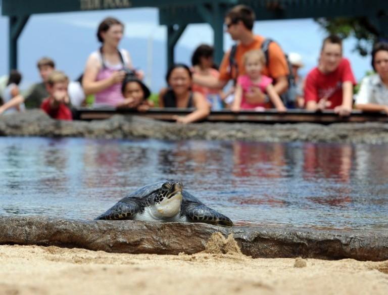 maui ocean center turtles