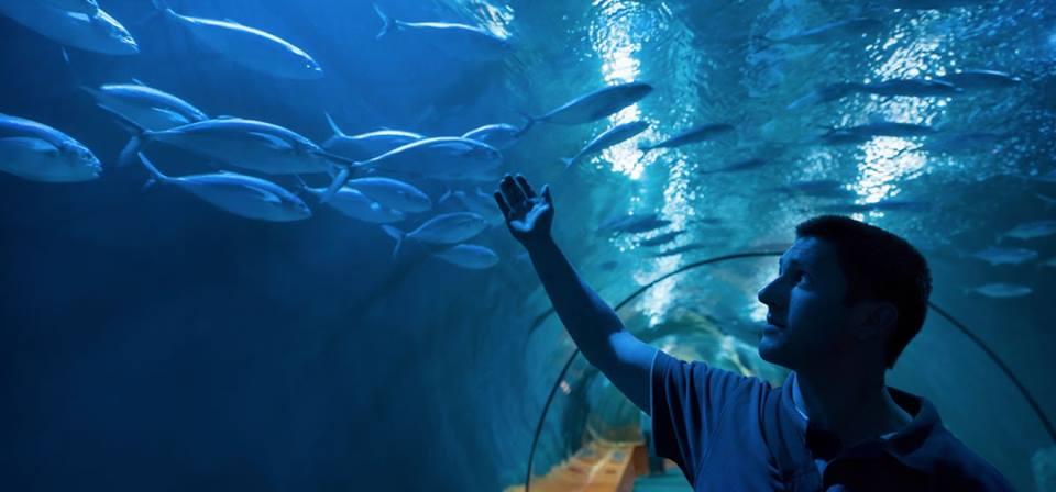 Australia's $54m Cairns Aquarium opens