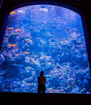 Cairns Aquarium maori wrasse tank