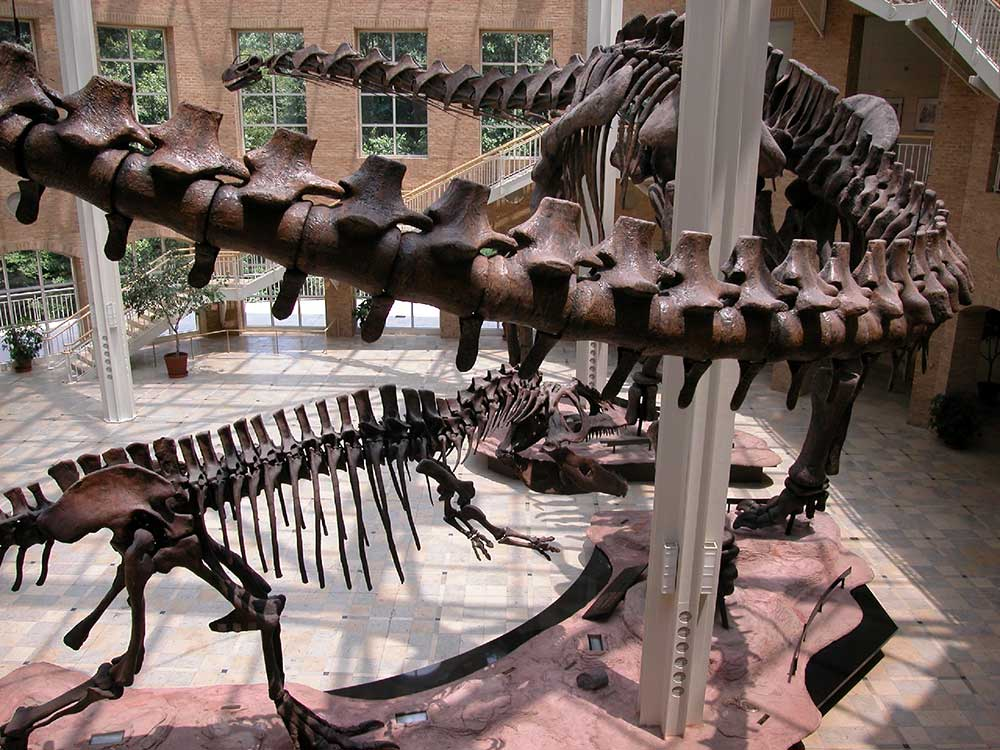 giants of the mesozoic Fernbank Museum of Natural History