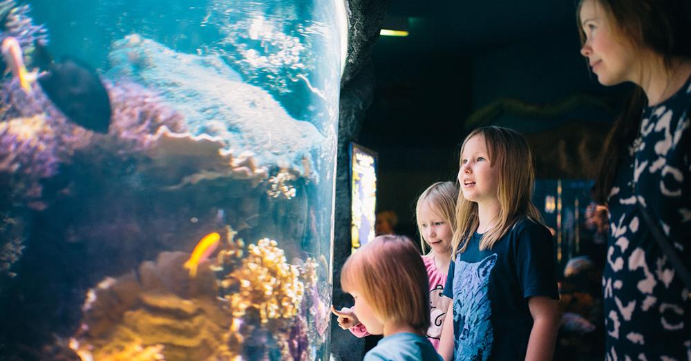 sea life helsinki aquarium Linnanmäki merlin