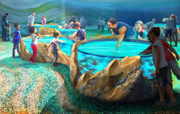 Touching pool at St. Louis Aquarium at Union Station