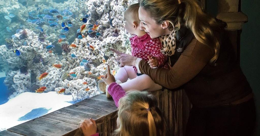 parent and toddler at sealife convious