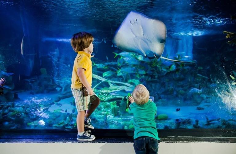 Sea Life. Legoland Malaysia Resort. Aquarium