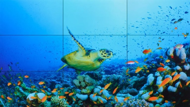 barco unisee LCD wall featuring turtle underwater