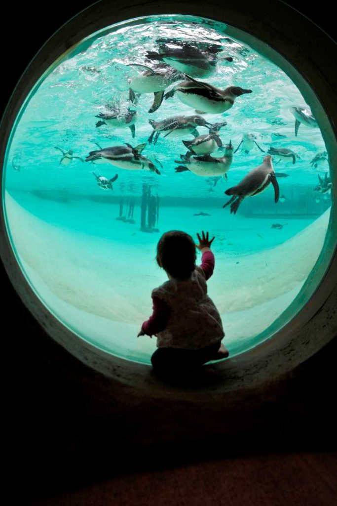 toddler at penguin beach zsl londond zoo