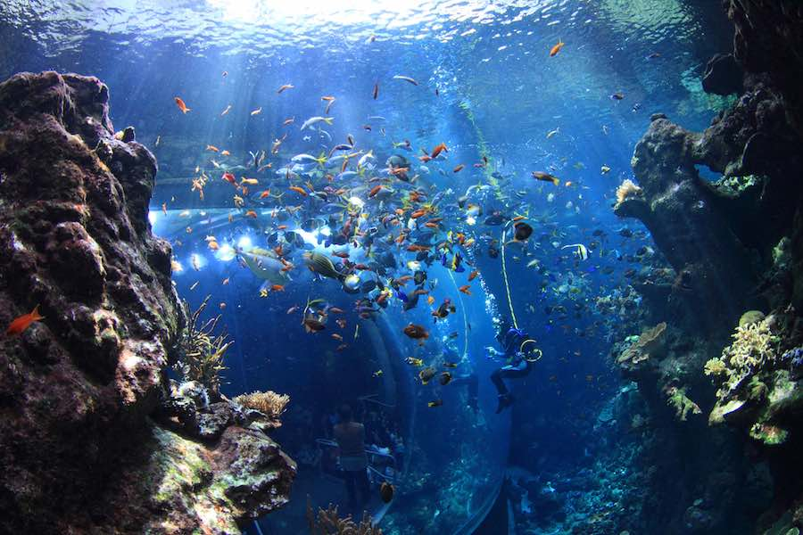 coral_reef_diver (Will Love © 2014 California Academy of Sciences) a