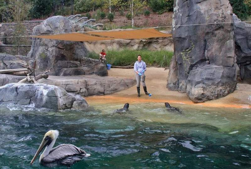 pelican and seals being fed at zoo