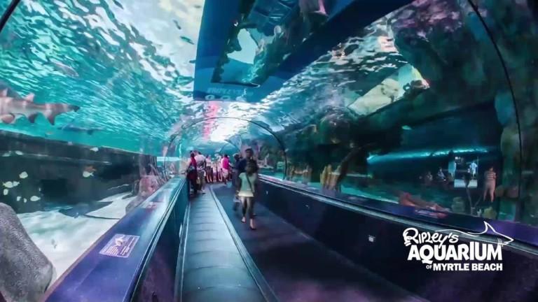 Ripley's Aquarium at Myrtle Beach.