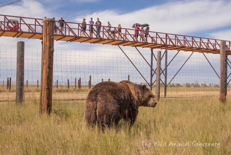 Mile into the Wild at the Wild Animal Sanctuary