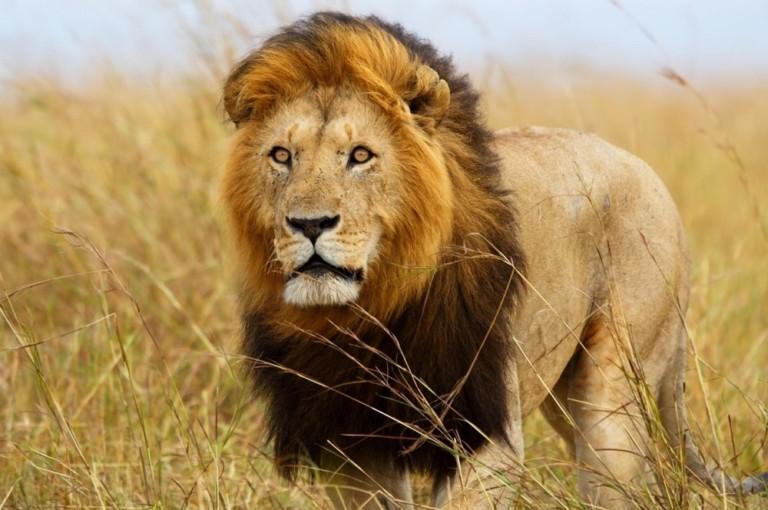 Great Plains Zoo adding lion exhibit