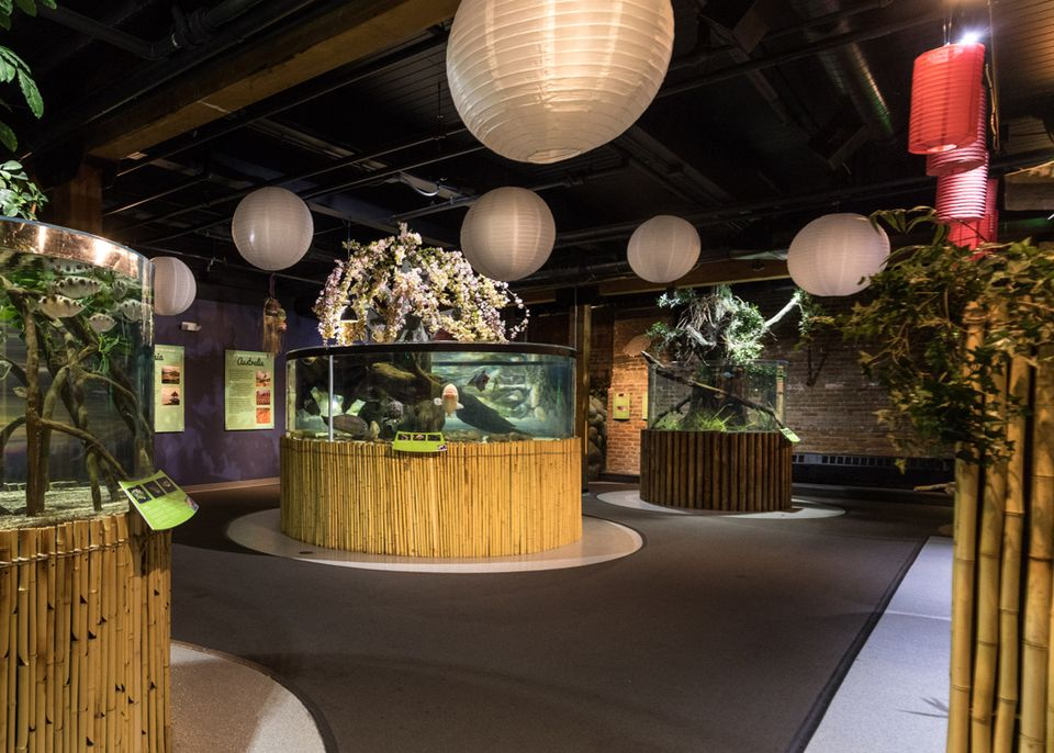 Artists rendering of a renovated exhibit at Greater Cleveland Aquarium.