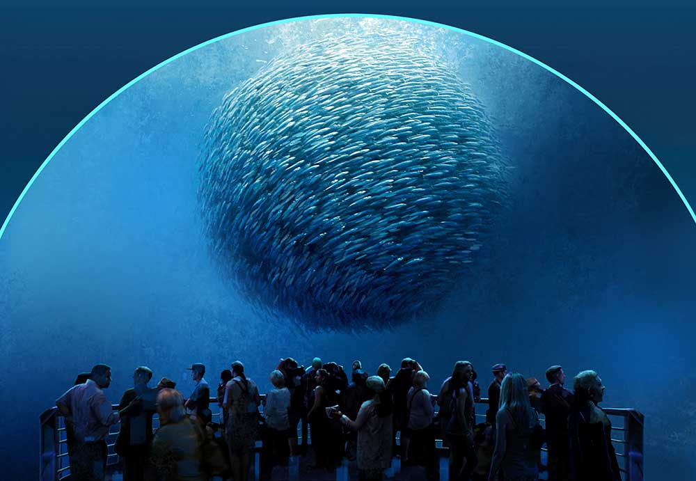 national geographic encounter bait ball