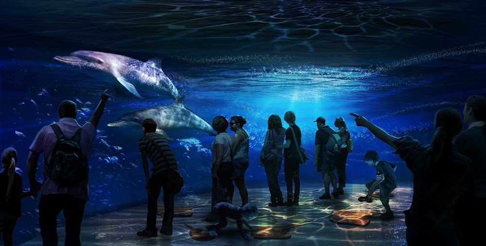 national geographic encounter: ocean odyssey shallow water