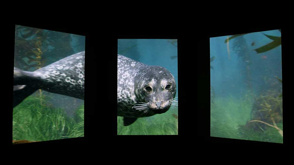 national geographic encounter pre show harbor seal