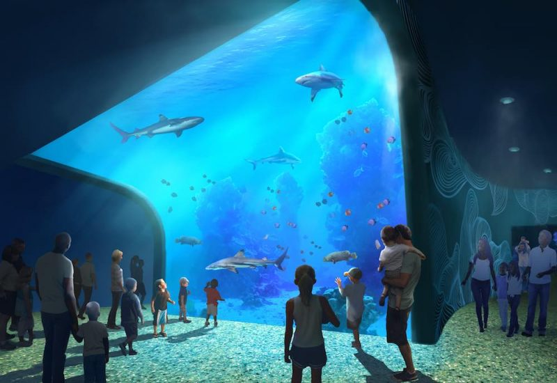 st. louis aquarium at union station shark tank )