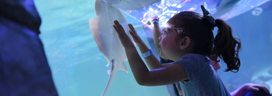 girl with ray at seaquest interactive aquarium x