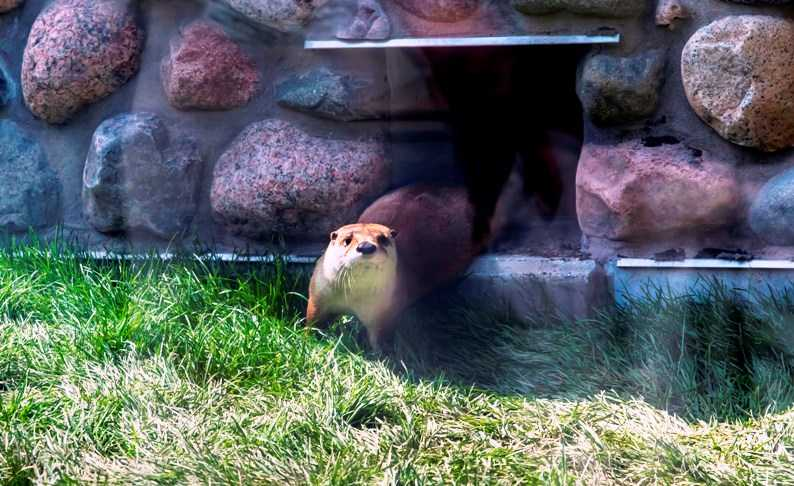river otter, otter passage, milwaukee county zoo