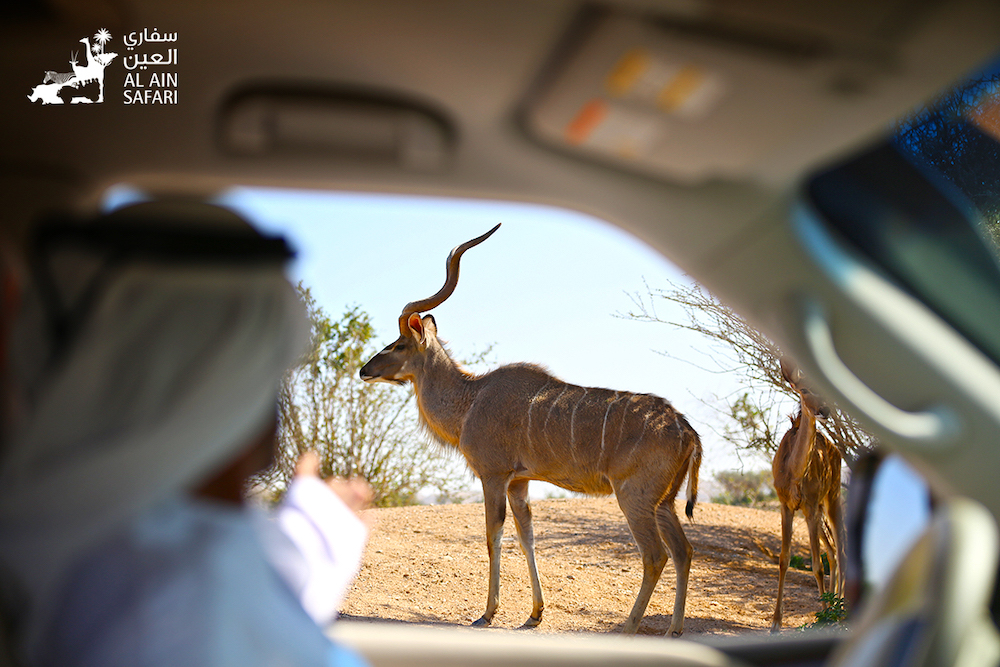 view from a safari at Al Ain Zoo, which has announced several new zoo expansion plans