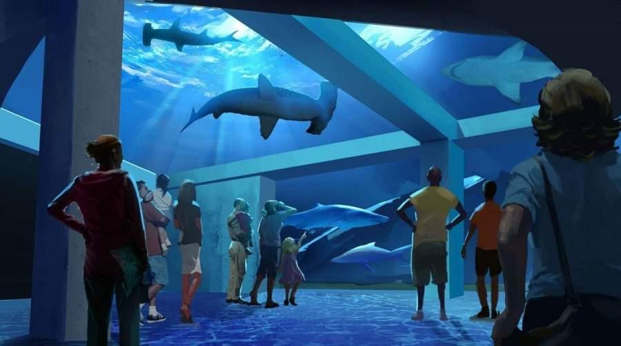 visitors look at hammerhead sharks at georgia aquarium