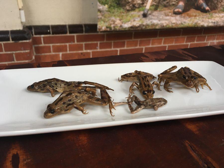 Frogs, Disgusting Food Museum