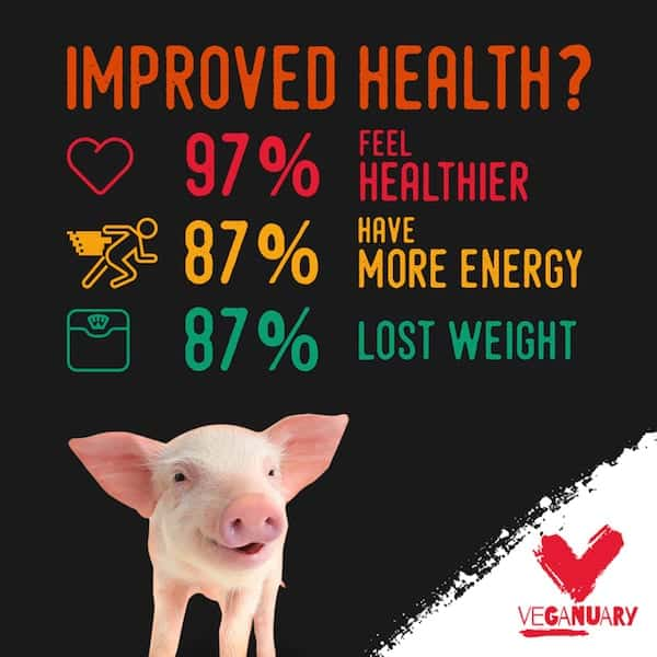 veganuary piglet improved health vegan