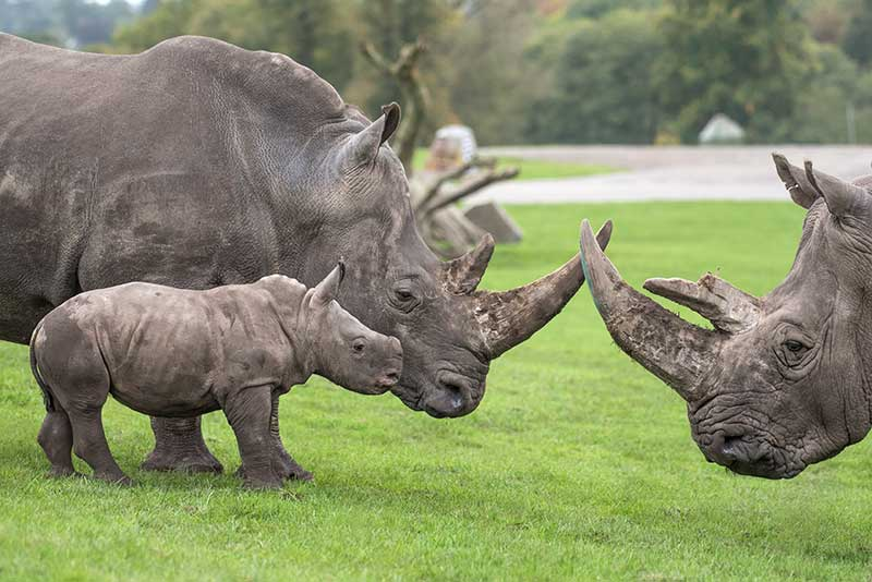 west midland safari park acquired by looping