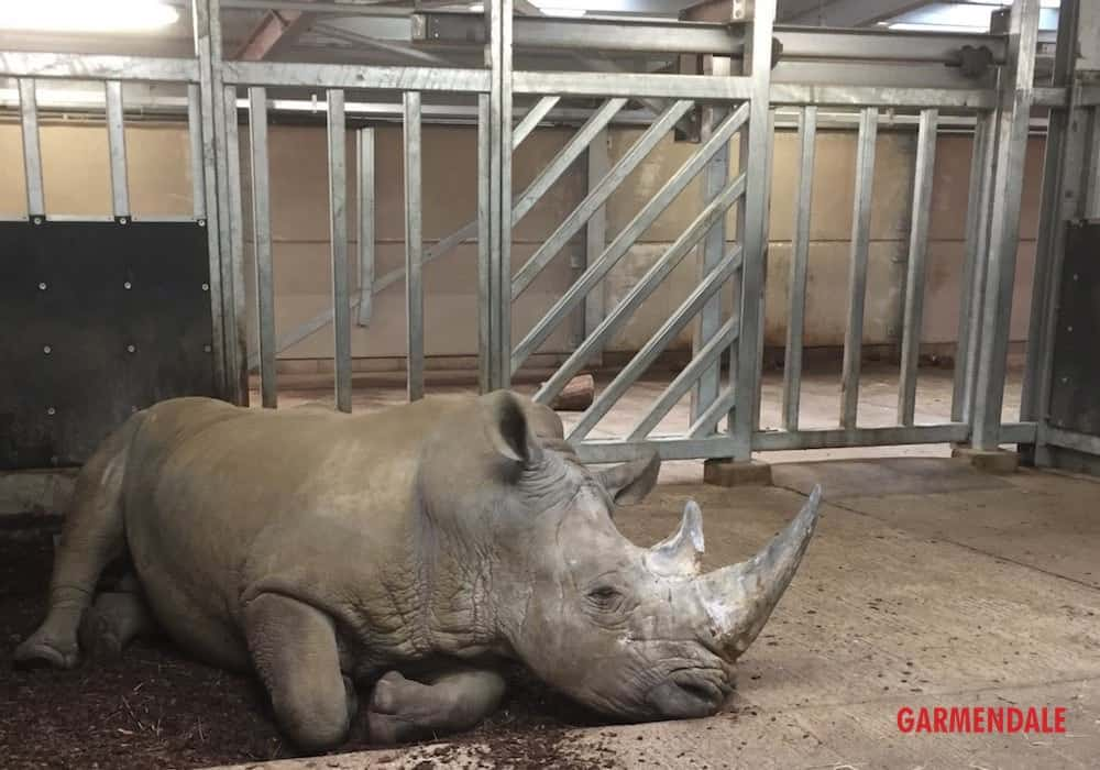 Zoo Engineering for the manufacture of a rhino enclosure