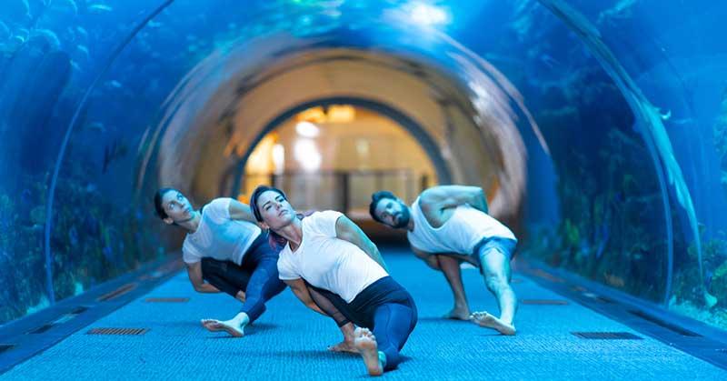 nderwatunderwater yoga at Dubai Aquarium