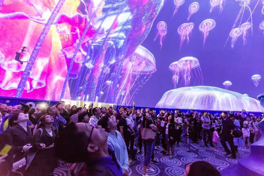 Shanghai-Haichang-Ocean-Park-jellyfish-multimedia-show