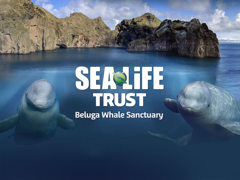 sea life trust beluga whale sanctuary